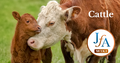 Cattle-photo-share.png
